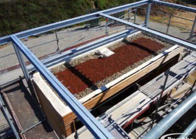 Dachbegrünung am neu abgedichteten Anbau